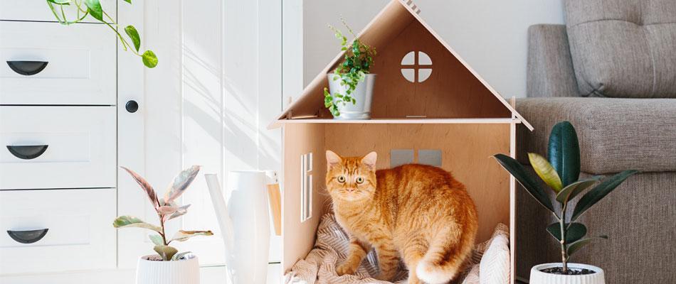 Adoption d'un chat