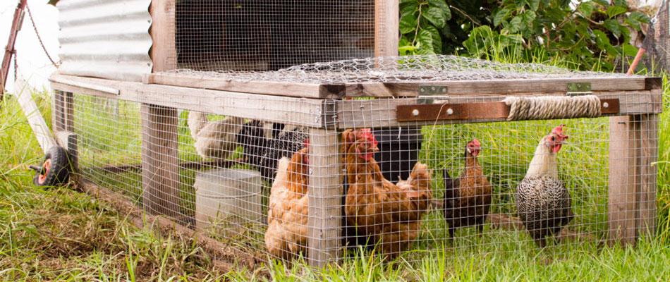 choisir sa cabane à poules