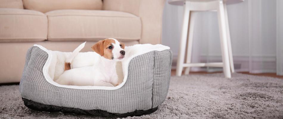 mobiliers pour les chiens